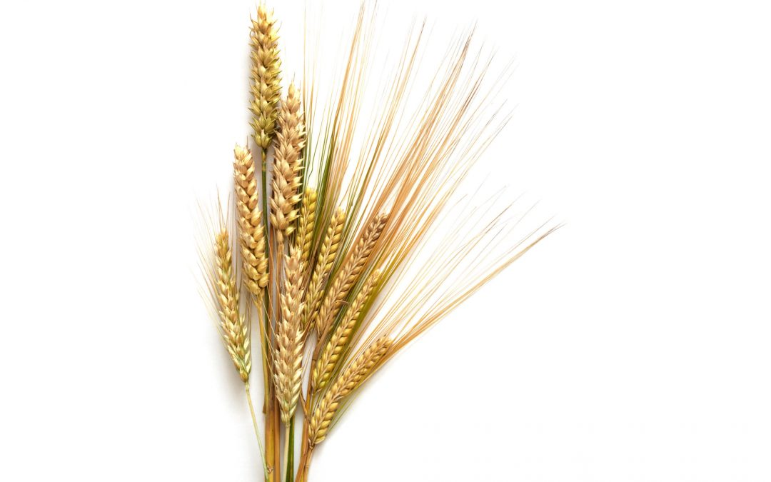 Wheat is the devil (for me anyway)